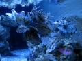 Zella-Mahlis Meeres-Aquarium Rotfeuerfisch