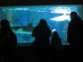 Zella-Mahlis Meeres-Aquarium